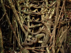 De natuur maakt een boombrug vanzelf steeds sterker