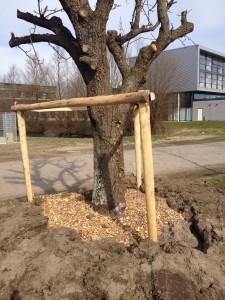 Hergebruik van oude bomen