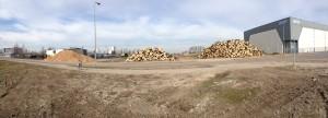oude bomen omgezet in biomassa