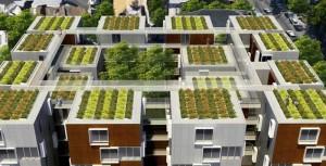 Groene daken hebben zeer veel voordelen.