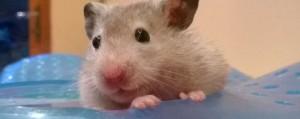 De hamster staat symbool voor opslag van energie