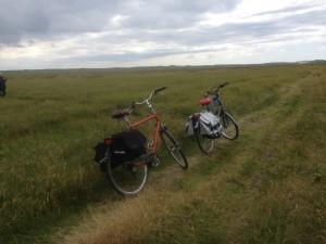Het is heerlijk fietsen op Terschelling dankzij de gevarieerde natuur. Bos, duin, heide, wadden en strand.